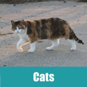 catsbanner