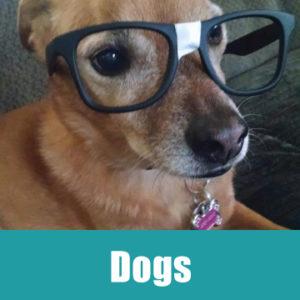dogsbanner