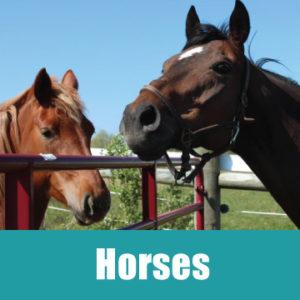 horsesbanner