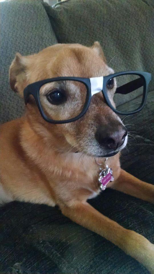 JoJo with glasses Halloween 2015